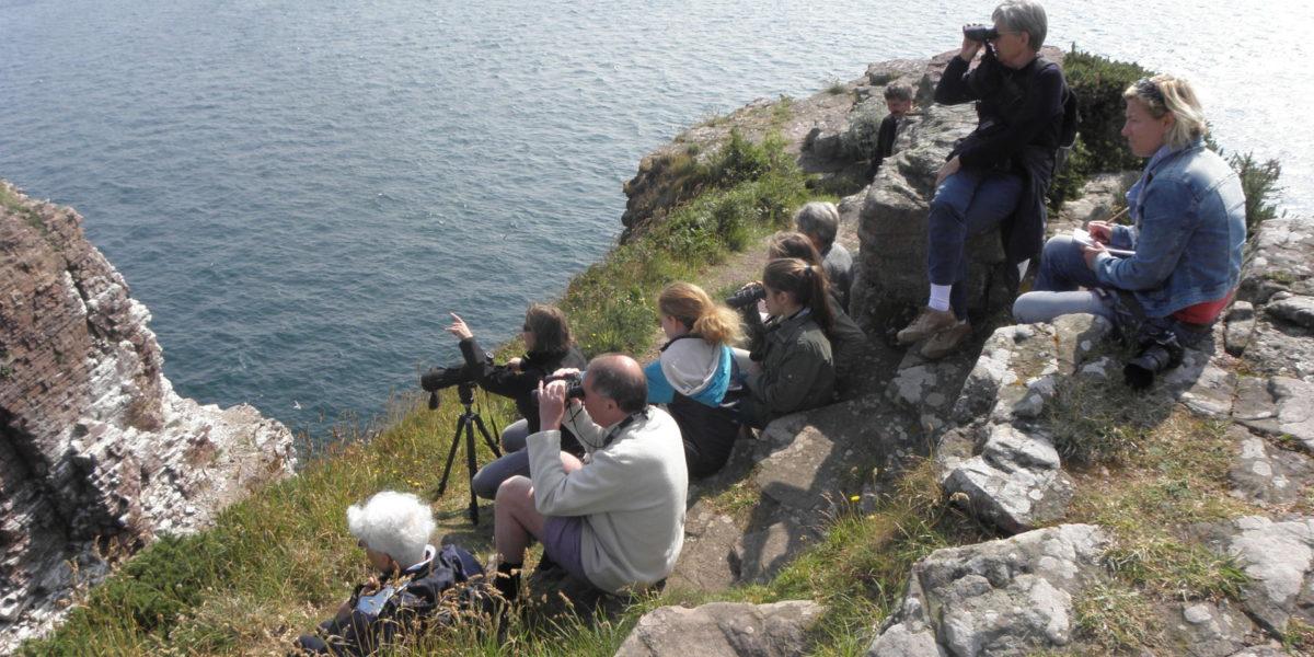 Observation des Oiseaux marins du Cap Fréhel