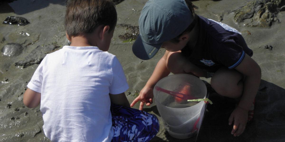 Monsieur Crabe – Animation pou les moins de 3 ans