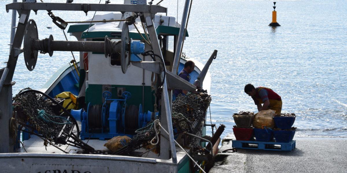 Retour de pêche – Port d'Erquy