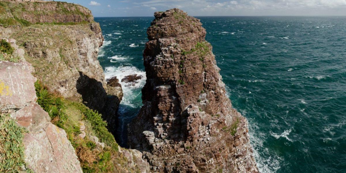 La Fauconnière, site ornithologique – Cap Fréhel