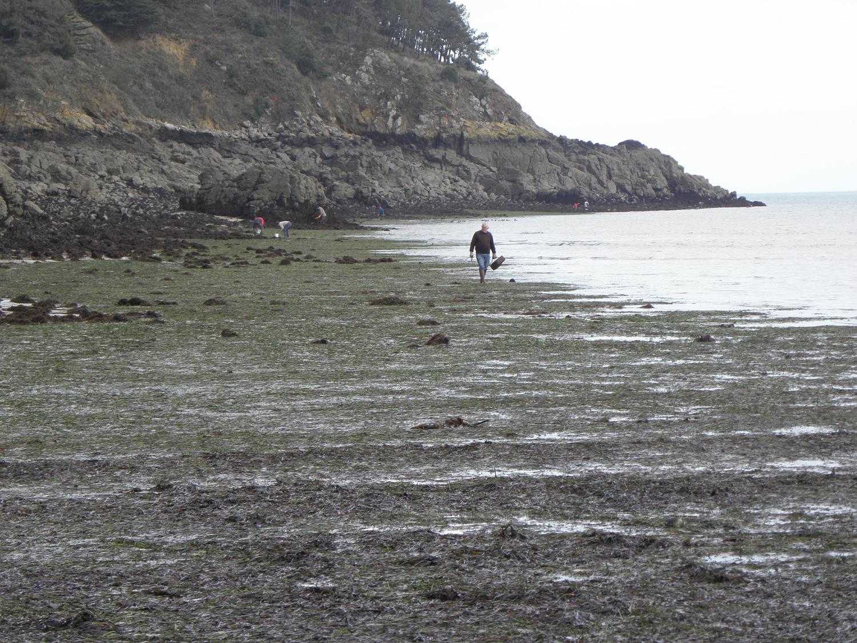 Observatoire de la pêche à pied de loisirs: restitution publique de l'Observatoire le 4 octobre